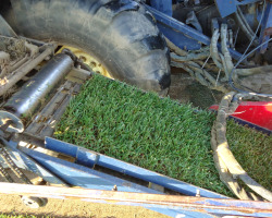 Εξαγωγή χλοοτάπητα| More Green Έτοιμος χλοοτάπητας - γκαζόν