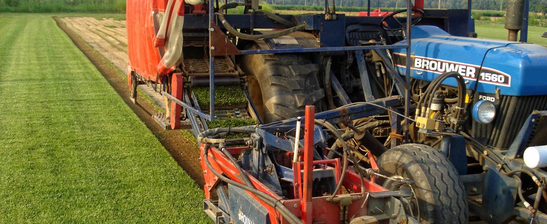 Συλλογή χλοοτάπητα από το χωράφι | More Green Έτοιμος χλοοτάπητας - γκαζόν