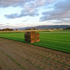 Εξαγωγή χλοοτάπητα | More Green Έτοιμος χλοοτάπητας - γκαζόν