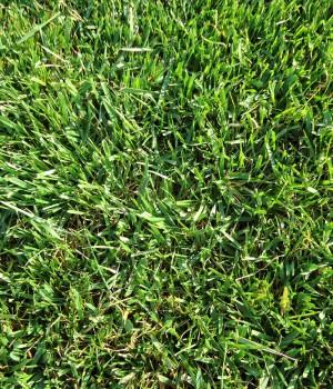 Καλλιέργεια χλοοτάπητα | More Green Έτοιμος χλοοτάπητας - γκαζόν