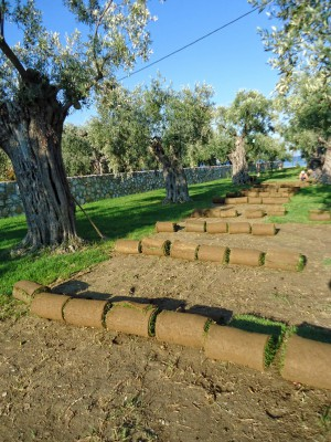 Καλλιέργεια χλοοτάπητα | More Green - Έτοιμος χλοοτάπητας - γκαζόν