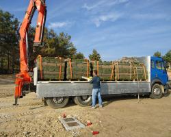 Προετοιμασία αποστολής χλοοτάπητα | More Green Έτοιμος χλοοτάπητας - γκαζόν